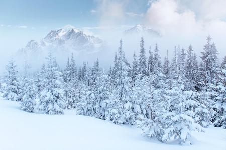 Mooie dikke mist. Magische winter sneeuw bedekte boom. Fotokaarten. lichteffect bokeh, zacht filter. Karpaten. Oekraïne. Europa
