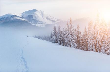 魔法の冬の雪に覆われた木。ドラマチックなシーン。カルパティア。ウクライナ。ヨーロッパ