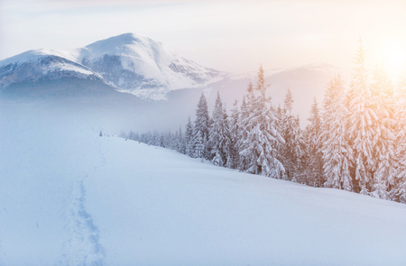Magical winter snow covered tree. Dramatic scene. Carpathian. Ukraine. Europe Stok Fotoğraf - 91275911