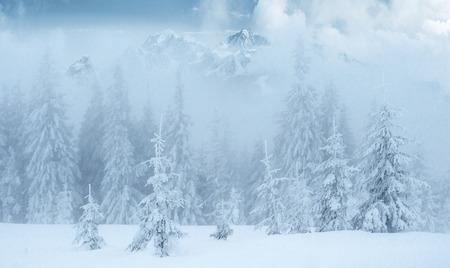 神秘的な冬の風景は、冬に壮大な山々。いい濃い霧だ魔法の冬の雪に覆われた木。フォトカード。光効果ボケ、ソフトフィルター。カルパティア。