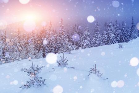 神秘的な冬の風景は、冬に壮大な山々。魔法の冬の雪に覆われた木。写真グリーティングカード。ボケライト効果、ソフトフィルター。カルパティ