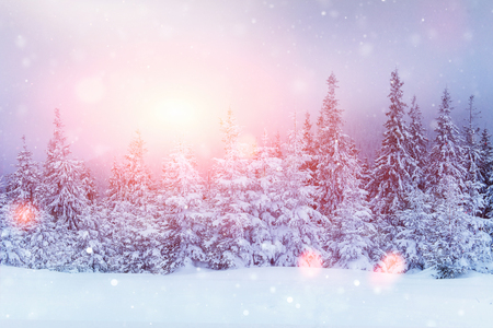 Mysterious winter landscape majestic mountains in winter. Magical winter snow covered tree. Photo greeting card. Bokeh light effect, soft filter. Carpathian. Ukraine. Europe Reklamní fotografie