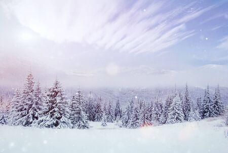 Mysteriöse Winterlandschaft majestätische Berge im Winter. Schöner dichter Nebel. Magischer Winterschnee bedeckte Baum. Fotokarten. Lichteffekt Bokeh, weicher Filter. Karpaten. Ukraine. Europa Standard-Bild - 91277693