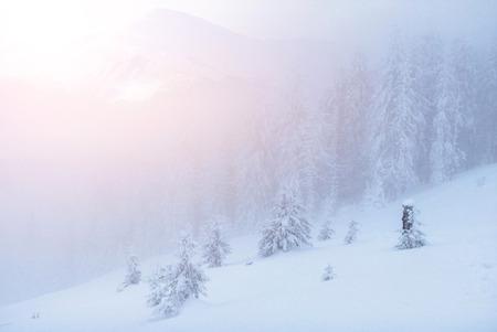 Mysteriöse Winterlandschaft majestätische Berge im Winter. Schöner dichter Nebel. Magischer Winterschnee bedeckte Baum. Fotokarten. Lichteffekt Bokeh, weicher Filter. Karpaten. Ukraine. Europa Standard-Bild - 91277695