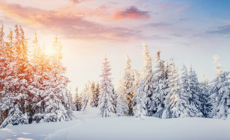 Mysterious winter landscape majestic mountains in winter. Magical winter snow covered tree. Dramatic scene. Carpathian. Ukraine. Europe Stock Photo