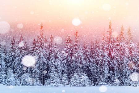 冬の神秘的な冬景色雄大な山々。魔法の冬の雪には、ツリーが覆われています。グリーティング カード。ピンぼけ光効果、ソフト フィルター。カル 写真素材