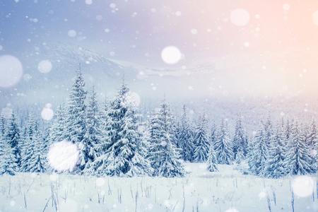 Mystérieux paysage hivernal montagnes majestueuses en hiver. Arbre magique recouvert de neige en hiver. Carte de voeux photo. Effet de lumière Bokeh, filtre doux. Carpates. Ukraine. L'Europe ? Banque d'images - 91277814