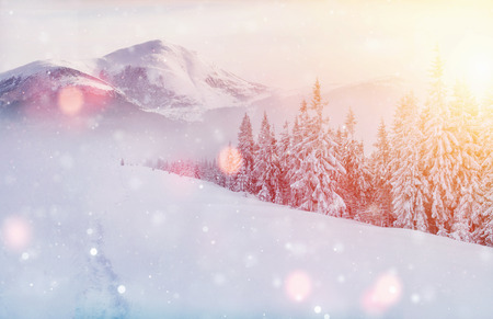 Mysterious winter landscape majestic mountains in winter. Magical winter snow covered tree. Photo greeting card. Bokeh light effect, soft filter. Carpathian. Ukraine. Europe Standard-Bild