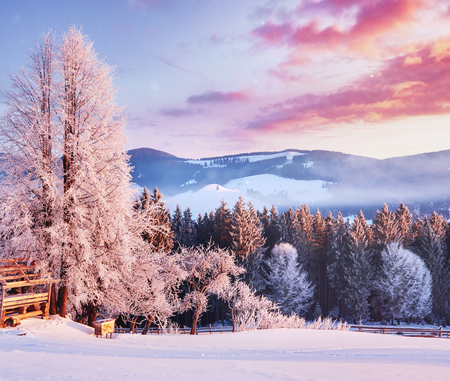 Amazing mountains in the morning sunlight. Small cozy village. Carpathian, Ukraine, Europe. Beauty world. Happy New Year.