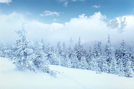 冬の神秘的な冬景色雄大な山々。素敵な濃い霧。魔法の冬の雪には、ツリーが覆われています。写真のカード。光の効果のボケ味、ソフト フィルタ 写真素材