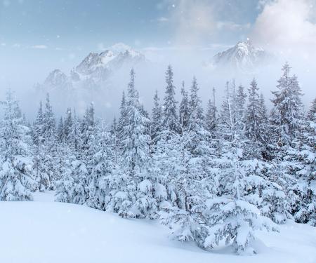 신비한 겨울 풍경 장엄한 산 겨울입니다. 마법의 겨울 눈이 덮여 나무. 사진 인사말 카드입니다. Bokeh 조명 효과, 부드러운 필터. 카르 파 티아 산맥. 우