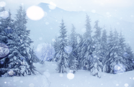 Mysterious winter landscape majestic mountains in winter. Magical winter snow covered tree. Photo greeting card. Bokeh light effect, soft filter. Carpathian. Ukraine. Europe. 版權商用圖片
