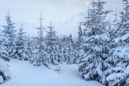 winterlandschap bomen en hek in rijm, achtergrond met enkele zachte hoogtepunten en sneeuwvlokken. Stockfoto