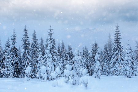 Mysterious winter landscape majestic mountains in winter. Magical winter snow covered tree. Photo greeting card. Bokeh light effect, soft filter. Carpathian. Ukraine. Europe. Stok Fotoğraf - 91277014