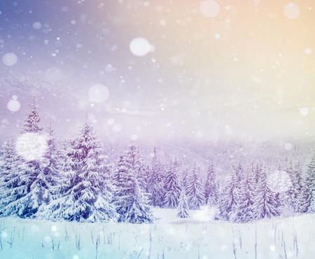신비한 겨울 풍경 장엄한 산 겨울입니다. 마법의 겨울 눈이 덮여 나무. 사진 인사말 카드입니다. Bokeh 조명 효과, 부드러운 필터. 카르 파 티아 산맥. 우크라이나. 유럽 스톡 콘텐츠 - 92048387