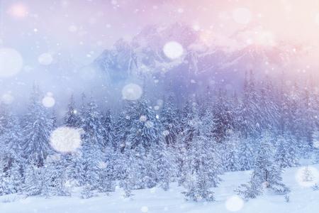 Mysterieuze majestueuze bergen van het de winterlandschap in de winter. Magische winter sneeuw bedekte boom. Foto-wenskaart. Bokeh lichteffect, zacht filter. Karpaten. Oekraïne. Europa