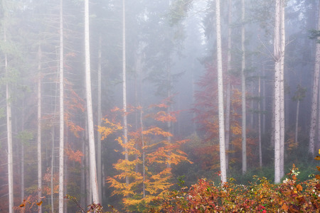 Beautiful morning in the misty autumn forest with majestic colored trees.