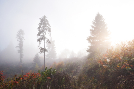 Morning fog creeps with scraps over autumn mountain forest covered in gold leaves. Reklamní fotografie - 100246084