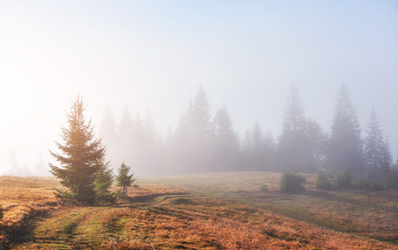 Morning fog creeps with scraps over autumn mountain forest covered in gold leaves. Reklamní fotografie - 100246085