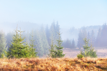 Morning fog creeps with scraps over autumn mountain forest covered in gold leaves. Reklamní fotografie - 100246086