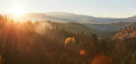 Morning fog creeps with scraps over autumn mountain forest covered in gold leaves.