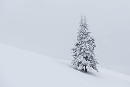 Fantastic winter landscape with one snow tree. Carpathians, Ukraine, Europe.