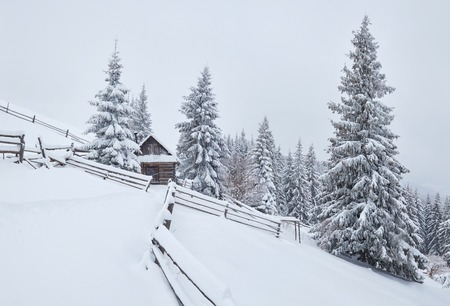 Cozy wooden hut high in the snowy mountains. Great pine trees on the background. Abandoned kolyba shepherd. Cloudy day. Carpathian mountains, Ukraine, Europe. Standard-Bild