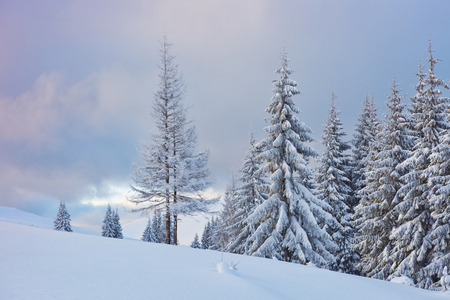 Great winter photo in Carpathian mountains with snow covered fir trees. Colorful outdoor scene, Happy New Year celebration concept. Artistic style post processed photo.