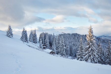 Majestic white spruces glowing by sunlight. Picturesque and gorgeous wintry scene. Location place Carpathian national park, Ukraine, Europe. Alps ski resort. Stock fotó