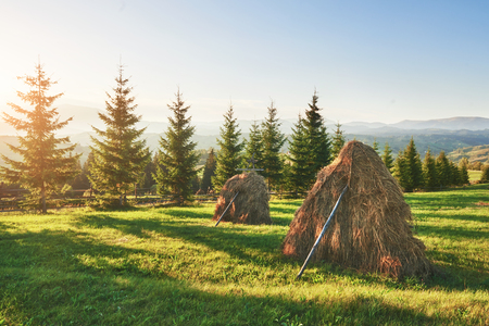 Haystack on sunset. Meadow, piece of grassland, especially one used for hay. Carpathian Mountains, Ukraine. Stock Photo
