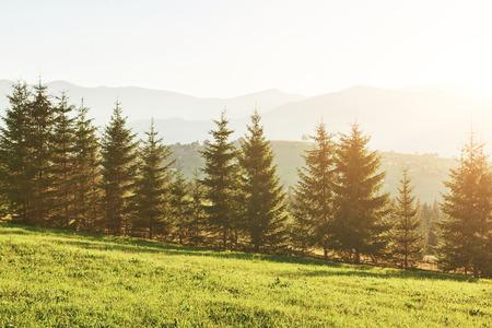 beautiful autumn sunrise landscape in the Carpathian mountains, Europe travel, west Ukraine, Carpathian national park, wonderful world, wallpaper landscape background.