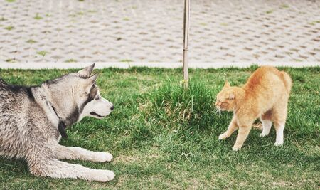 Cat against a dog, an unexpected meeting in the open air.