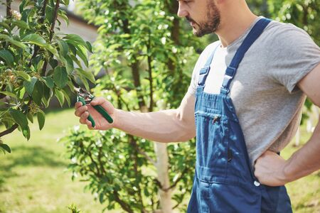Un jardinier professionnel au travail coupe des arbres fruitiers Banque d'images