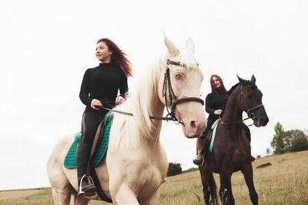 Dwie młode ładne dziewczyny na koniu na polu. Kocha zwierzęta i jazdę konną.