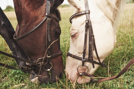 Two beautiful riding horses, brown and white, stand together with their heads to each other.