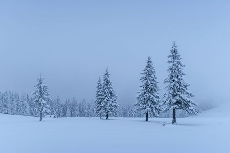 A calm winter scene. Firs covered with snow stand in a fog. Beautiful scenery on the edge of the forest. Happy New Year!