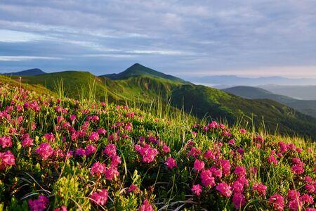 Cliff tops. Majestic Carpathian mountains. Beautiful landscape. Breathtaking view. Zdjęcie Seryjne