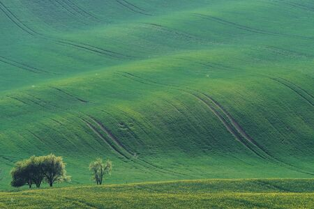 Beautiful meadow. Green agricultural fields of Moravia at daytime. Nice weather.