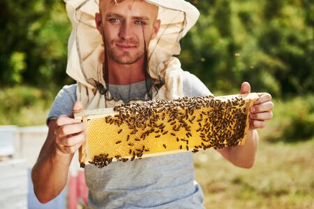Looks straight forward. Beekeeper works with honeycomb full of bees outdoors at sunny day.