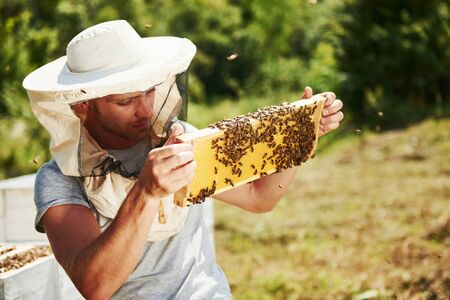 Beekeeper works with honeycomb full of bees outdoors at sunny day.