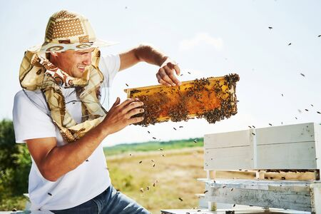 Need to be careful. Beekeeper works with honeycomb full of bees outdoors at sunny day.