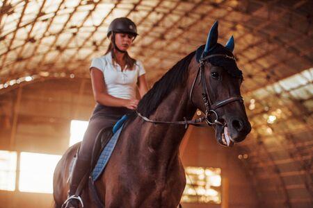 Maestosa immagine della sagoma del cavallo con pilota su sfondo tramonto. La ragazza fantino sul dorso di uno stallone cavalca in un hangar in una fattoria.