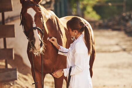 Using stethoscope. Female vet examining horse outdoors at the farm at daytime.