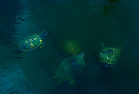 Four turtles in a pond at a public park in the Woodlands, TX.