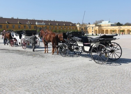 horses waiting for tourists