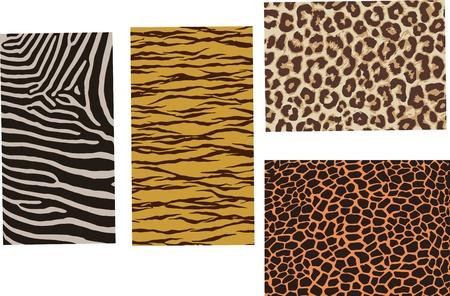 Animal colore della pelle