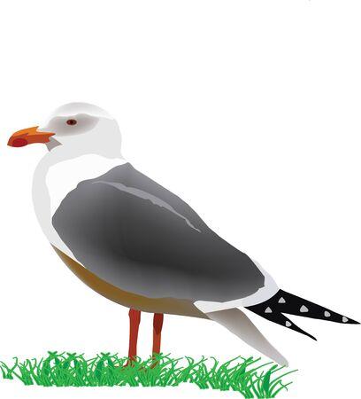 opportunist: bird seagull