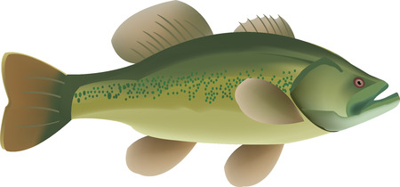 teaches: Predatory fish that live in freshwater green Illustration