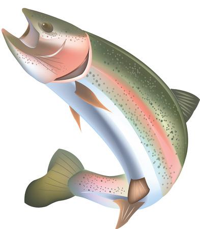 trucha: peces de agua dulce de la trucha de depredadores Vectores