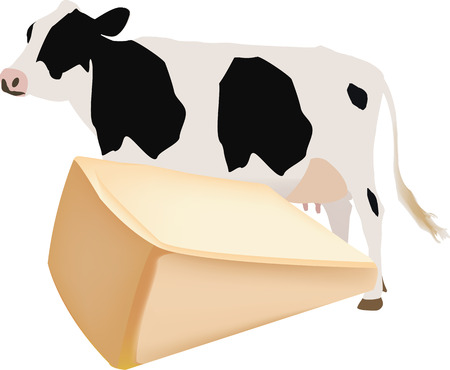 dairy cattle: cheese and dairy cattle